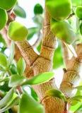 A folha da árvore Foto de Stock
