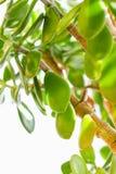 A folha da árvore Fotos de Stock Royalty Free