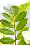 A folha da árvore Imagem de Stock