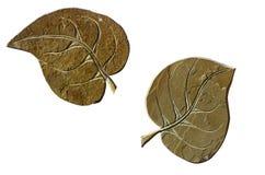 A folha da árvore cortou da pedra isolada no branco imagens de stock