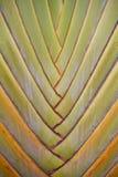 Folha da árvore dos viajantes Imagem de Stock