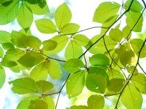 Árvore no tempo de mola