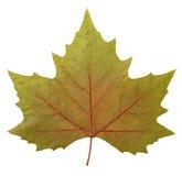 Folha da árvore plana Imagens de Stock