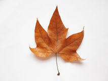 Folha da árvore plana Fotografia de Stock Royalty Free
