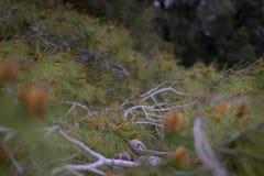 Folha da árvore fotografia de stock