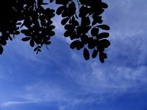 A folha da árvore sob o céu azul Fotos de Stock