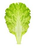 Folha da alface isolada Fotografia de Stock