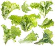 Folha da alface verde. Imagens de Stock