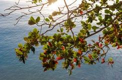 Folha da amêndoa de Malabar com superfície do mar da opinião de ângulo alto foto de stock royalty free