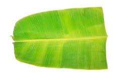 Folha da banana Fotografia de Stock Royalty Free