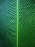 folha da banana Imagem de Stock