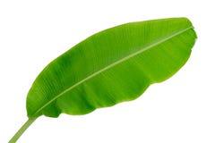 Folha da banana isolada no fundo branco, Imagens de Stock