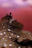 Folha da chuva Imagem de Stock Royalty Free