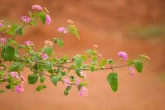 Folha da flor Imagem de Stock Royalty Free