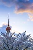 A folha da flor da ameixa do rádio central e a televisão elevam-se Imagem de Stock