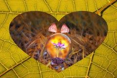 Folha da flor de borboleta do conceito da ecologia do amor imagem de stock royalty free