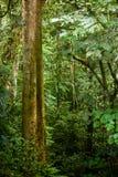 Folha da floresta úmida foto de stock royalty free