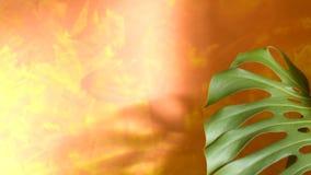 Folha da floresta húmida Foto de Stock Royalty Free