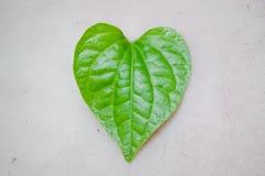 Folha da forma do coração Foto de Stock