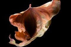 Folha da forma da vulva fotografia de stock royalty free
