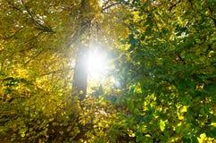 Folha da foto do fundo da natureza no por do sol tomado perto acima em cores mornas usando o bokeh macro Folhas backlit por raios Fotografia de Stock Royalty Free