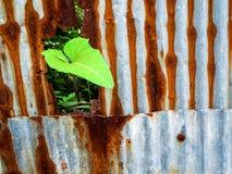 Folha da glória e oxidação de aço galvanizada e corrosão da cerca fotografia de stock