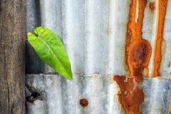 Folha da glória e oxidação de aço galvanizada e corrosão da cerca fotos de stock