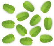 Folha da hortelã fresca isolada no fundo branco, vista superior fotografia de stock royalty free