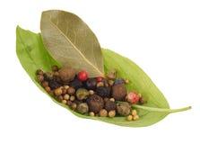 A folha da manjericão com especiarias Fotos de Stock