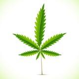 Folha da marijuana Imagens de Stock