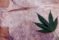 Folha da marijuana do cannabis e fundo sujo grosseiro da lona do grunge Fotografia de Stock Royalty Free