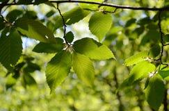 Folha da natureza Fotografia de Stock
