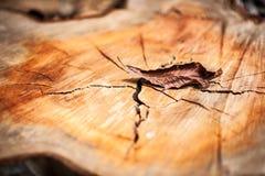 A folha da natureza morre na luz suave Fotos de Stock