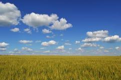 Folha da nuvem da natureza do céu Foto de Stock