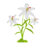 folha da pétala da flor do açafrão Fotografia de Stock Royalty Free