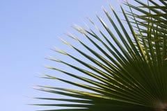 Folha da palma Imagem de Stock