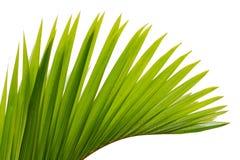 Folha da palmeira Foto de Stock Royalty Free