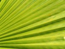 Folha da palmeira Imagens de Stock