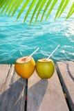 Folha da palmeira do cocktail dos cocos nas Caraíbas Fotos de Stock Royalty Free