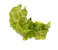 Folha da salada Foto de Stock Royalty Free
