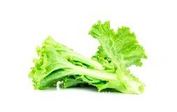 Folha da salada, alface isolada no fundo branco imagem de stock