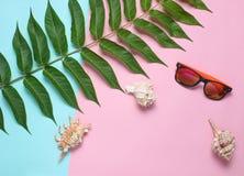 Folha da samambaia, óculos de sol, escudos em um fundo pastel colorido Women' acessórios de s, estilo botânico, resto da pra foto de stock royalty free