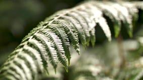 Folha da samambaia na floresta video estoque
