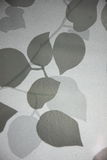 Folha da sombra Fotografia de Stock