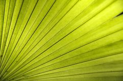 Folha da textura Fotografia de Stock