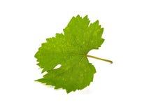 Folha da uva imagem de stock