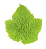 Folha da uva isolada Fotografia de Stock Royalty Free