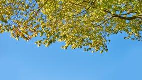 Folha das árvores contra um céu azul brilhante Imagens de Stock
