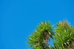 Folha das árvores contra um céu azul brilhante Fotografia de Stock Royalty Free