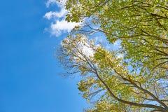 Folha das árvores contra um céu azul brilhante Foto de Stock Royalty Free